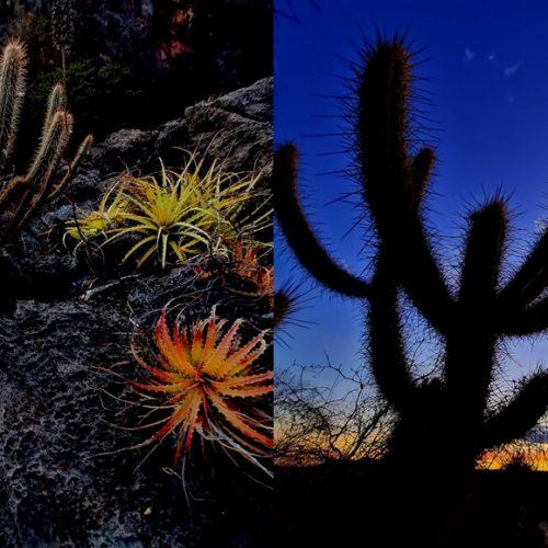 Fotógrafo faz ensaio da caatinga e mostra semiárido colorido do Piauí