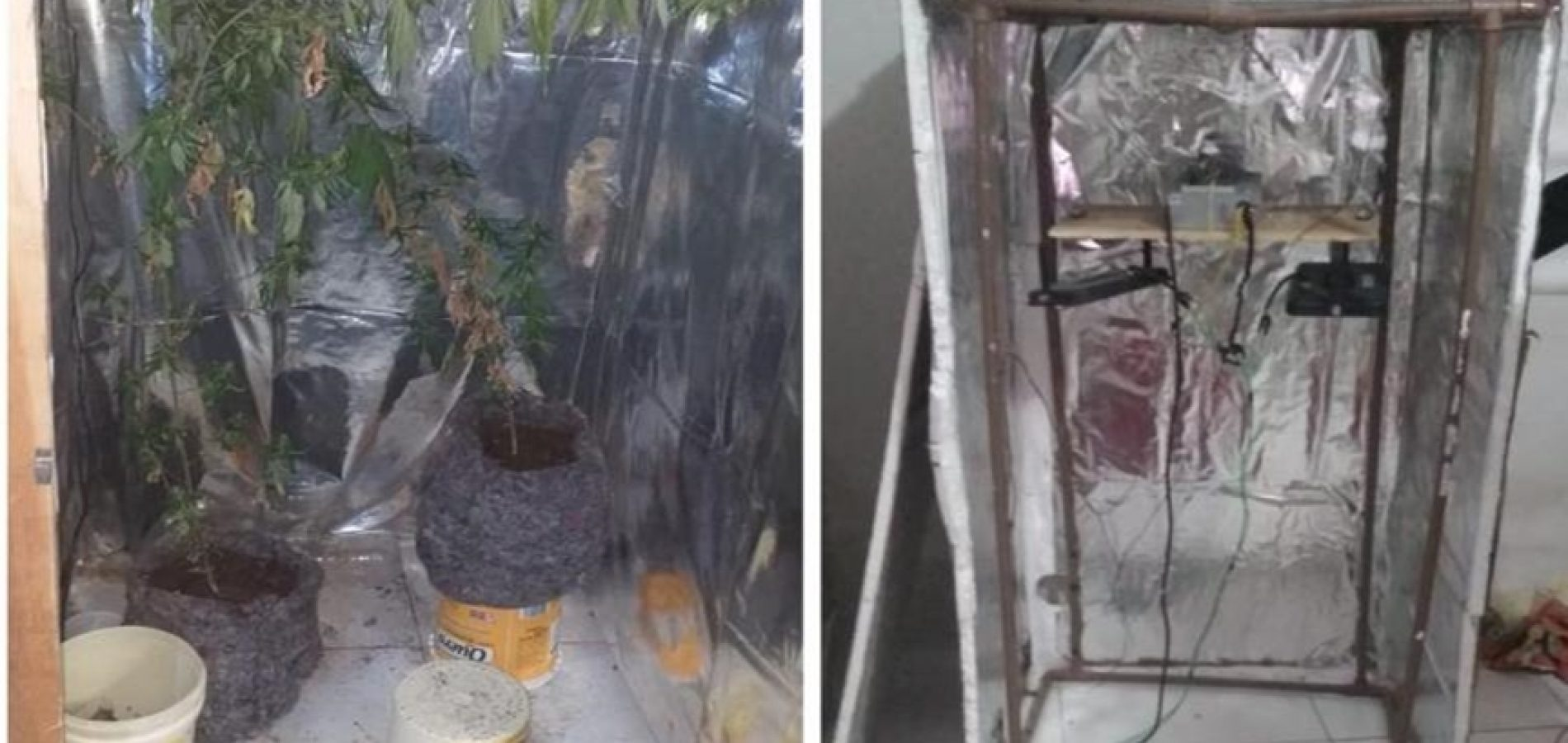 PM encontra estufas de maconha em casa e homem é preso no Piauí