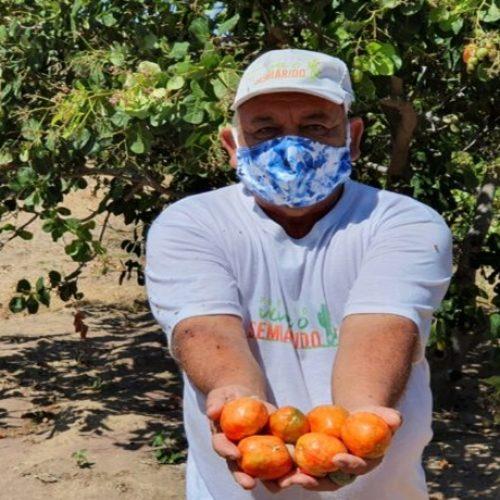 Ambev inicia compra de cajus na região de Picos para produção de cerveja no Piauí