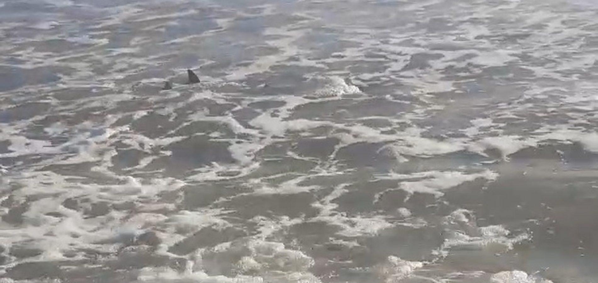 PI tem praias lotadas e bombeiros alertam sobre presença de tubarões no mar: 'evitem entrar na água'