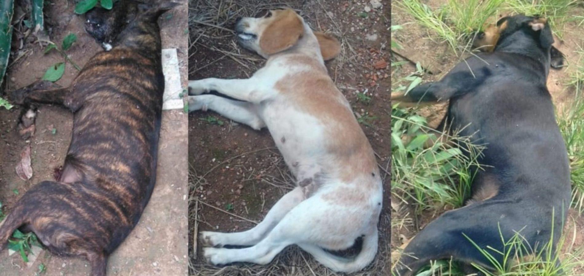 Cães e gatos são mortos por envenenamento em Fronteiras