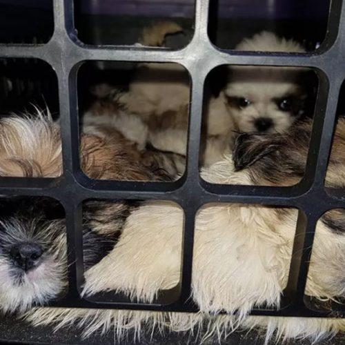 Mais de 10 cães são resgatados em ônibus que ia para o Piauí