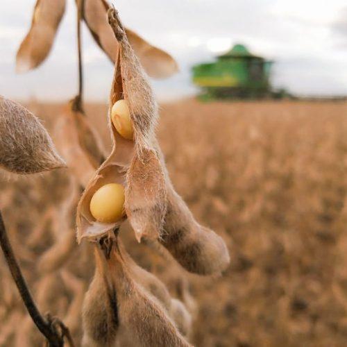 Piauí gera R$ 4,3 bilhões com a venda de sua produção agrícola