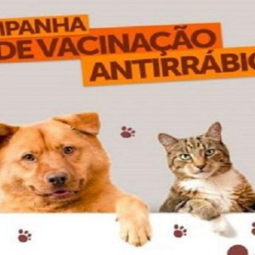Campo Grande do PI realiza Campanha de Vacinação Antirrábica Animal; dia 'D' acontece no sábado (24)