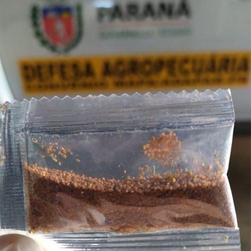 Adapi faz alerta fitossanitário sobre sementes misteriosas e pede que não sejam plantadas