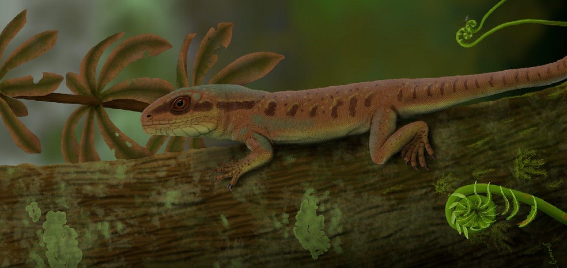 Pneu furado em estrada do Piauí leva a descoberta de réptil inédito da Era Paleozoica