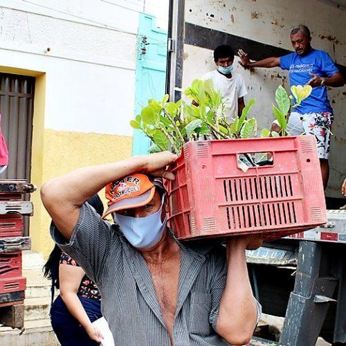 Prefeitura de Santo Antônio de Lisboa distribui 10 mil mudas de caju para agricultores; fotos
