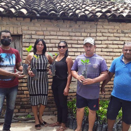 Prefeitura de Geminiano distribui 4 mil mudas de caju para agricultores