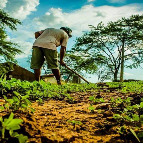 JACOBINA   Agricultores recebem Garantia Safra em parcela única e quase 300 mil é injetado na economia local