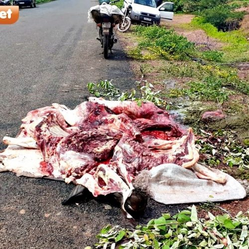 Ônibus colide e mata animais na PI-238 entre Bocaina e São João da Canabrava; fotos